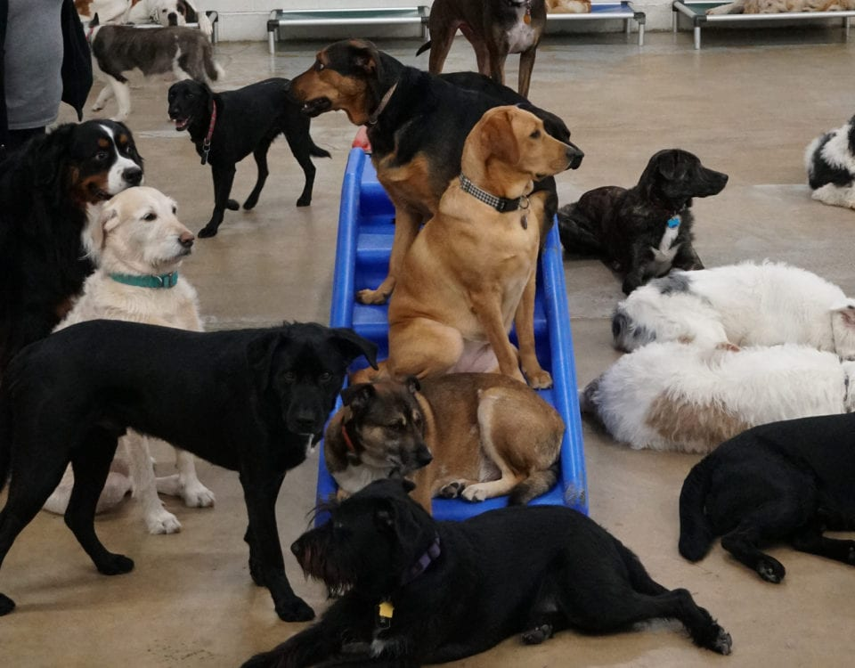 Group of dogs at Leader of the Pack Canine Institute's dog kennel