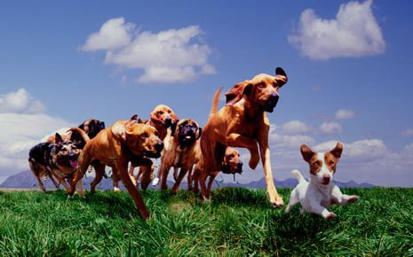 Group of dogs running in a field on a sunny day at our doggy daycare facility